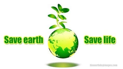 Essay on Save Trees - Worlds Largest Collection of Essays!